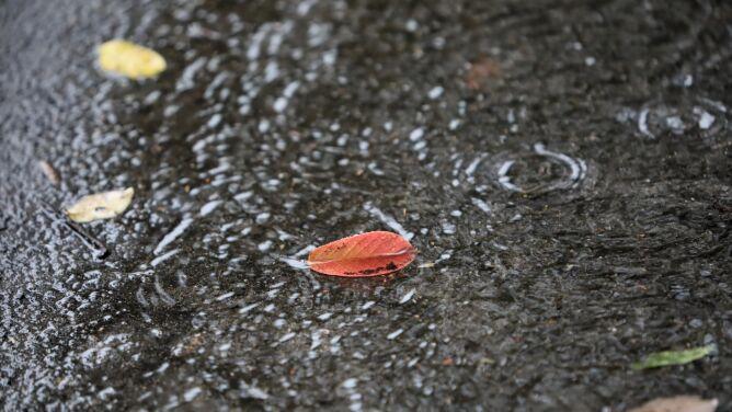 Pogoda na dziś: dzień pod znakiem opadów