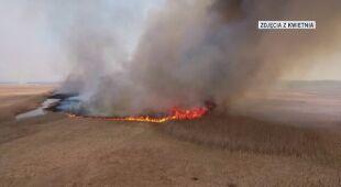 Tak wyglądał pożar w Biebrzańskim Parku Narodowym