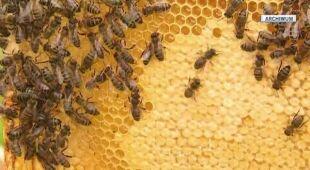 Coraz mniej pszczół w Polsce (Archiwum TVN24)